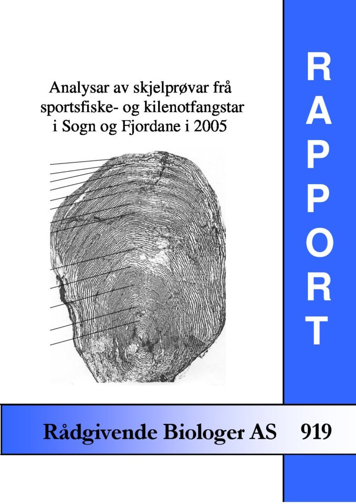 Rapport cover - rapport 919